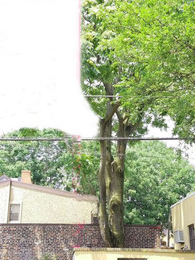 Tree Damage and Safety Impact Caused by Proposed Development