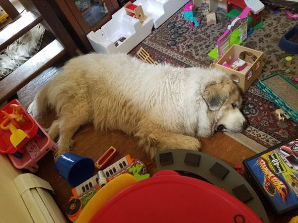 Big Dog Tired After a bath