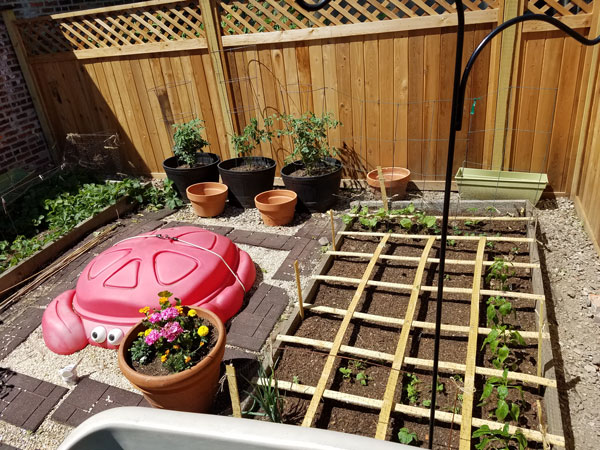 garden and crab