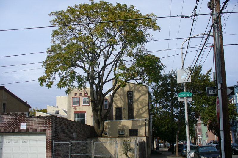 Tree post trimming 2010