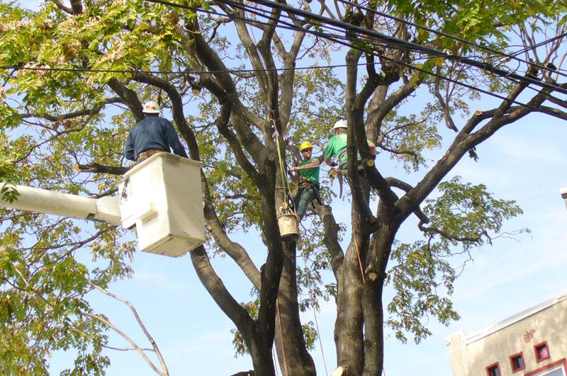 bucket and tree climbers