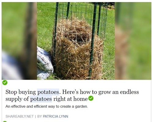 potato tower by patricia lynn
