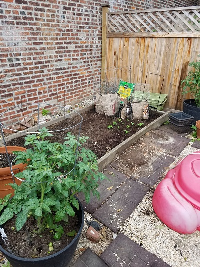 raised bed with new potato towers
