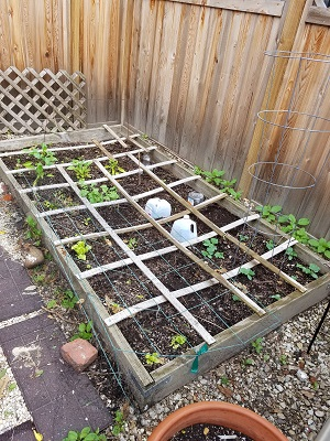 square foot garden may 2017